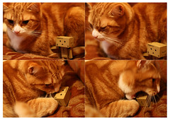 Friends (nathanjharwood) Tags: red cats playing cat kitten danbo danboard