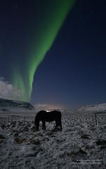 Aurora borealis / northern lights hgs_n7_065234 (Helgi Sigurdsson) Tags: sky horses horse snow storm del stars lights luces solar iceland heaven aurora tormenta northern sland northernlights norte borealis boreal snjr nordlys helgi hestar hestur garar norurljs sigursson sigurdsson  gardar