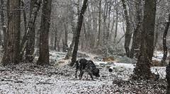 Mastik sous la neige