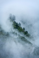 Trees in clouds (Dmitry Rukhlenko Travel Photography) Tags: cloud india mist mountain mountains nature fog clouds landscape outdoors countryside scenery alone loneliness peace emotion country peaceful fantasy valley serenity serene lonely concept emotional conceptual himalaya aloneness emotions solitary himalayas cloudscape himalayan kullu himachalpradesh concepts kulluvalley