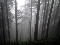 In The Woods (Dru!) Tags: canada rain fog forest dark woods bc britishcolumbia science cascades steep chilliwack cascademountains geomorphology nevin dunville huntinglandslides