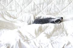 lazy badger (swig - filz felt feutre) Tags: animal oneofakind felt badger dachs swig laine filz wolle feutre woll blaireau unikat filztier feutr piceunique sculpturetextile feltedanimal gefiltzestier