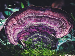 Cogumelo pau (Rodrigo Geraldini) Tags: cogumelo pau cores sitio funge biologia