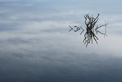 Mirrored water sticks (Kiwi Jono) Tags: pentax pentaxk5 water sticks branch sea negative space reflection mirror samyang85f14 ripples sky arty lagoon peaceful relaxing tree cloud murky