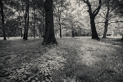 Potawatomi--2 (Dahai Z) Tags: morning monochrome landscape blackwhite testshot canonefs1022 potawatomiwoods canoneosdmarkii