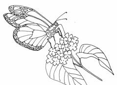 Butterfly Color Me 2 (Art by Deborah Landry) Tags: flowers ink butterfly watercolor spring drawing arts bee relief prints encaustic engaging pollinators coloringpages deborahlandry