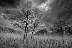 Three Trees (annemcgr) Tags: trees monochrome grass clouds landscape blackwhite flora kerry fineartphotography annemcgrath