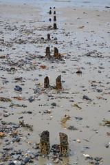 Old groynes (curly_em) Tags: beach outside pier seaside sand isleofwight ryde