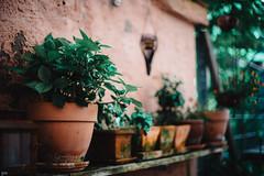 "Die ""grne Hlle"" (Petra Wendt) Tags: plants green garden 50mm nikon df pflanzen grn 50mmf14 flowerpots blumentpfe nikkor50mm14 rni nikonafsnikkor50mm114g nikondf"