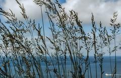 Brisa (Jose Losada Foto) Tags: acorua campo cielo espaa excursin fotografia galicia joselosada lugares mar naturaleza nikon nikond90 paisajes plantas nuages nubes azul blue agua barcos barquitos boats windy
