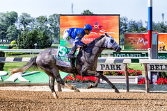 Frosted (southpaw captures) Tags: park horse belmont racing met mile stakes frosted