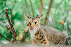 (Tridentz | ) Tags: cat cats neko animal eyes eye straycat streetcat cute lovely look    sony a7 alpha alpha7 50mm 50 f18 18 fe hongkong