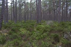 Heide (kathy.kerk) Tags: uk trees tree forest scotland highlands loch wald bume baum schottland