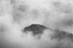 Where'd You Go? (Dreshad Williams) Tags: trees usa white black nature beauty oregon dark landscapes photo day alone moody quiet pacific northwest cloudy foggy gritty dreamy sorrow hilltop 500px
