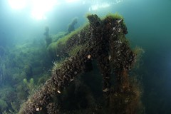 IMG_3710 (Andrey Narchuk) Tags: russia moscow freshwater green underwater weed tree
