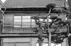 160504_NikomatFt2_031 (Matsui Hiroyuki) Tags: fujifilmneopan100acros nikonnikomatft2 nikonnikkorhauto85mmf18 epsongtx8203200dpi