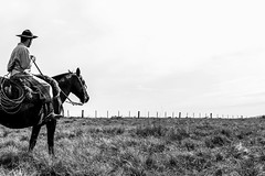 'Raízes, tronco, ramagem..' (Suzana Fernandes Fotografia) Tags: horse cavalo caballo gaucho pampa campo cavaleiro campesino campeiro rio grande do sul pampeiro nativo nativismo