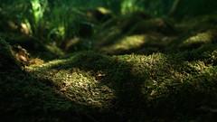 orman güneşi