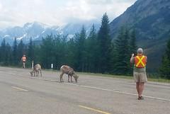 Passing Goats Support (Downhillnut) Tags: mountains calgary race kananaskis longview relay nakiska 2016 crr k100 100miles relayteam 10runners calgaryroadrunners k1002016
