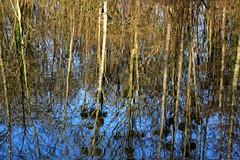 Livry-sur-Seine, HDR, 12 (Patrick.Raymond (2M views)) Tags: france 77 livrysurseine ens bois foret etang arbre reflets hdr nikon samyang expressyourself
