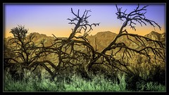Santa Catalina Mountains (Sugardxn) Tags: arizona mountain southwest tree colors photoshop canon landscape catalina desert tucson outdoor az vista catalinamountains catalinastatepark picswithframes canoneos7d canon7d sugardxn garypentin
