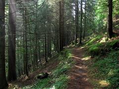 il sentiero - the path (ma.ri_na) Tags: funghi pace sentiero fresco trentino aria bosco quiete valledelvanoi valzanca
