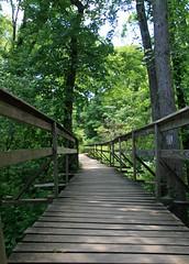 Appalachian Trail Boardwalk Bridge (dlberek) Tags: nature landscape newjersey swamp wetlands boardwalk appalachiantrail sussexcounty