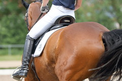 IMG_3061 (dreiwn) Tags: horse pony horseshow pferde pferd equestrian horseback reiten horseriding showjumping dressage reitturnier dressur reitsport dressyr ilsfeld dressuur ridingclub junioren ridingarena pferdesport springreiten reitplatz reitverein dressurreiten dressurpferd dressurprfung tamronsp70200f28divcusd jugentturnier