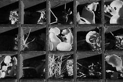 Unter Glas (Alf Layla wa Layla) Tags: madrid city urban plant flower nature glass spain capital hauptstadt natur pflanze blumen espana stadt blume glas spanien