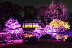 Nijo Castle Gardens II (Douguerreotype) Tags: park tree castle japan night garden dark cherry kyoto blossom cherryblossom sakura