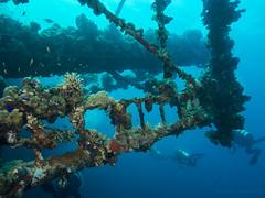 SS Humbria - Arrecife Wingate - Port Sudan (JuanAnd-erwater) Tags: pecio portsudan seleccionar humbria