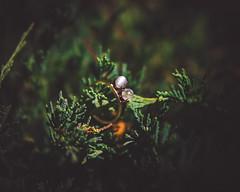 Moonstone Ring (Hummingdust) Tags: wedding light art nature vintage utah engagement nikon dof natural beautifullight naturallight jewelry ring nouveau deco tamron f28 moonstone moonstones 2470 engagementphotography utahphotographer utahweddingphotographer creativeweddingphotography woodsengagementsession nikondf