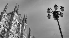 duomo di milano (Sergey S Ponomarev) Tags: sergeyponomarev canon 70d ef24105f40l landscape architecture duomo milano milan italy italia trip travel winter linverno bw bn biancoenero 2016 febbraio bird lamp lampione city citta                 europe europa