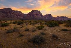 Desert Garden (Sairam Sundaresan) Tags: redrockcanyon vegas sunset cactus usa nature canon landscape desert joshua patterns dry wideangle finished redrock shrub arid sairam sundaresan buhses sairamsundaresan escaype sonya7rii
