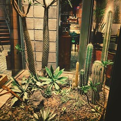 Bit of a prickly reception here... #xiamen #cacti #restaurant #terriblepun (Martin Donohue) Tags: cacti restaurant here reception xiamen prickly bit terriblepun instagram ifttt mdonohue95