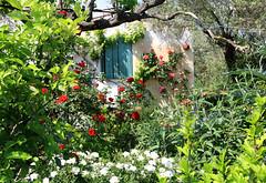 A mediterranean garden (Marlis1) Tags: roses rosen finca onexplore mediterraneangarden marlis1 kletterrosen canoneos1000d catalunyaspainmarliestortosa onexploremay9th2013