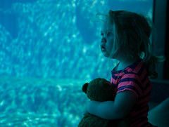 Enthralled (cgrawson) Tags: aquarium toddler teddy beluga