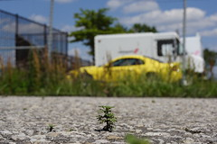 Tiny Trees--JFK Airport (Upsidedown NYC) Tags: airport weeds parkinglot jfk tiny