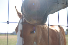 mother's day (jypsygen) Tags: portrait horse sun cute love animal texas child sweet farm country mother lensflare motherhood colt equine foal