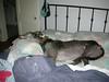 GreyhoundPlanetDay2008001