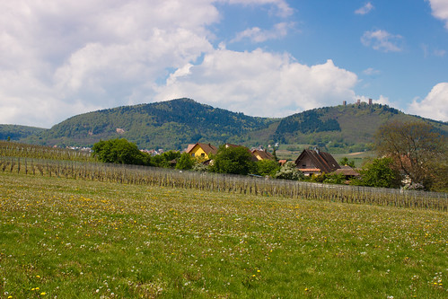 Hauteurs d'Eguisheim
