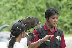 Nikon TC 17E II, Nikon 70-200mm F2.8 VR II, Nikon D800 (Barry Zee) Tags: bird singapore african vulture awake venue ornithology trainer committee volt disambiguation baldheaded nikontc17eii oldworldvulture nikond800 nikon70200mmf28vrii baldheadedvulture