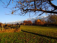 L'automne en dcembre ~ Autumn in December (Michele*mp) Tags: autumn mountain france montagne alpes grenoble automne landscape geotagged europe bluesky paysage frenchalps cielbleu belledonne meylan isre rhnealpes dauphin closdescapucins michelemp geo:lat=45222403797084276 geo:lon=5778858695770282
