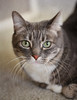 I Only Have Eyes for You (WisteriaLane) Tags: cats catportraits beautifulcats