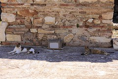 Two Feral Cats (oxfordblues84) Tags: cats cat turkey feline felines stonewall ephesus greekruins ncl ancientruins shoreexcursion norwegianspirit feralcats mosaicfloor norwegiancruiseline ancientgreekruins norwegianspiritcruise norwegianspiritshoreexcursion magnificentephesus