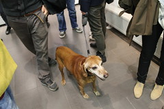dogs design croatia zagreb designers youngdesigners