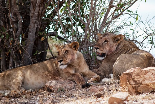 """Tsavo Est (96 di 265) • <a style=""""font-size:0.8em;"""" href=""""http://www.flickr.com/photos/121308622@N02/14014747043/"""" target=""""_blank"""">View on Flickr</a>"""
