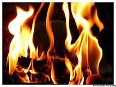 Hawan (Raman_Rambo) Tags: light flower phoenix fire bright god flames holy pooja fires puja agni hawan