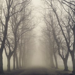 Enter The Abyss! (Michelle O'Connell Photography) Tags: park trees winter mist fog square scotland victoriapark glasgow entrance squareformat westend foggymorning jordanhill whiteinch iphoneography victoriaparkglasgow instagramapp uploaded:by=instagram glasgowfog michelleoconnellphotography