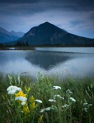Sulphur Mountain and Wildflowers (See Best) Tags: travel sunset summer vacation mountain canada cold flower reflection nature weather landscape rockies photography evening nationalpark cool sony conservation landmark alberta banff